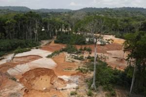 area-selvaggiamente-disboscata