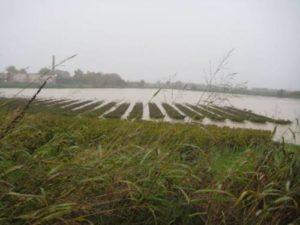 maltempo-agricoltura