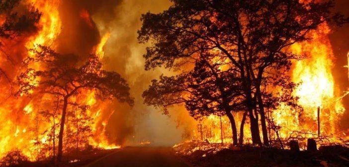 """Incendio nei boschi dell'Ennese, il M5S: """"Uno scempio in piena regola frutto del totale abbandono di un intero territorio"""""""