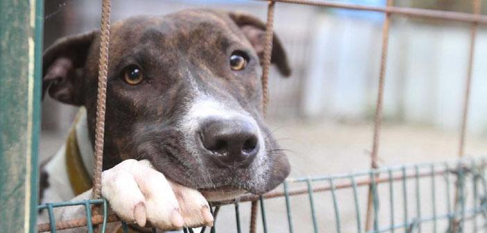 Cani avvelenati: M5S, ai Comuni servono risorse non commissioni Ars