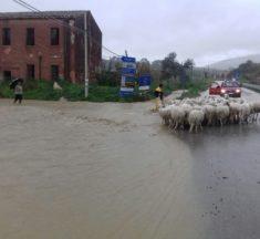 Agricoltura. Sunseri (M5S), stagione a rischio causa clima. Bandiera chieda stato di calamità al ministro Centinaio