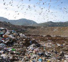 Emergenza rifiuti. M5S: Responsabilità di Musumeci